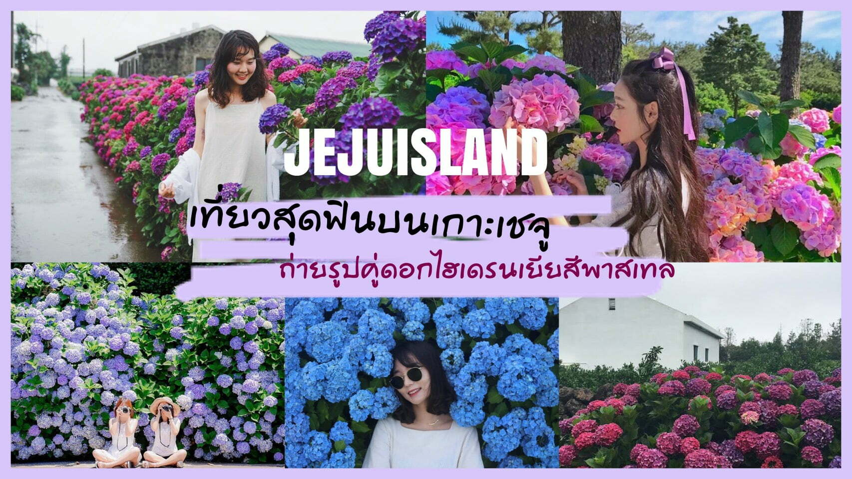 ทัวร์เกาหลี – เที่ยวสุดฟินบนเกาะเชจู ถ่ายรูปคู่ดอกไฮเดรนเยียสีพาสเทล